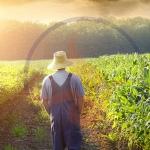 ไคโตซานกับการทำเกษตร